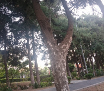 Ağaçların Dilinden