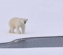 Film Terapi – Arctic – Kendime Yolculuk